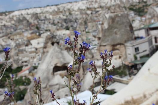 cappadocia_flowers
